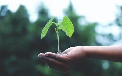 Construção civil e sustentabilidade: por que elas devem caminhar de mãos dadas?